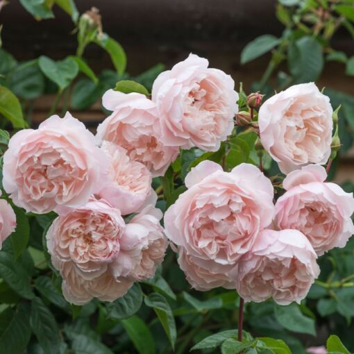 The Generous Gardener® AUSdrawn-0